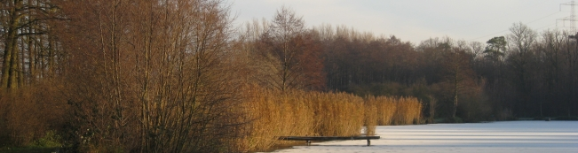 Steg_Angelteich_Winter